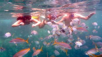 Kids enjoy the colourful variety of reef fish